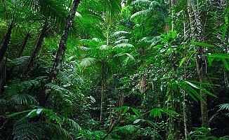 Kuraklığın reçetesi, ağaç sayısını artırmak