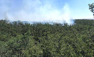 Çorum'da orman yangını, çok sayıda ekip sevk edildi