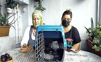 Hasta güvercinin bakımını üstlendiler