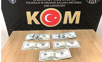 KOM'dan sahte dolar operasyonu