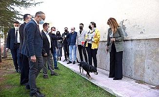 Fen-Edebiyat'ta 'Köpek Evi' projesi