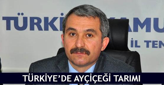 Türkiye'de ayçiçeği tarımı