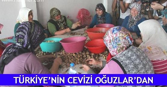 Türkiye'nin cevizi Oğuzlar'dan