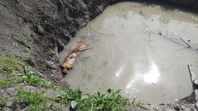 Canını kurtardı, sonra da sahiplendi
